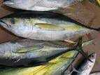 Setting up a fish farm:the basics
