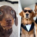 20 Dog Posts That Made People Smile In 2020