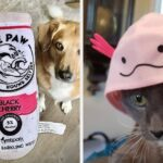 29 Things To Add To Your Pet's Stocking This Year