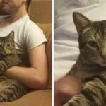 17 Cats Who Would Steal Anyone's Partner In A Heartbeat