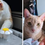 25 Problem-Solving Products From Amazon For Cat Owners