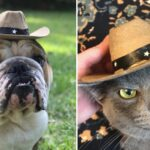 17 Gifts For That One Friend Whose Pet Has Like 2,000 Followers On Instagram