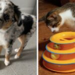 16 Toys From Amazon To Keep Your Pets Busy Indoors This Winter
