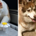 39 Problem-Solving Pet Products From Amazon You'll Probably Want To Start 2021 With