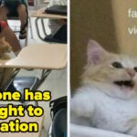 Just 21 Cats On Tumblr That Are As Chaotic As They Are Lovable