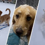 These Dogs Experiencing Snow For The First Time This Year Are Too Cute
