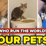 39 Products For Anyone Whose Pet Runs Their House