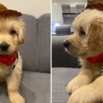 14 Dog Posts From This Week That Are Preeeeetty Good...Almost Suspiciously Good