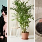 27 Things That Can Help Improve The Air Quality In Your Home