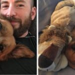 Chris Evans Taught Himself How To Sew To Surprise His Dog After Surgery, And It's Unbelievably Pure