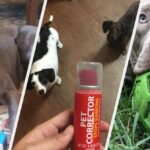 23 Products To Help Stop Your Dog From Chewing Everything You Own