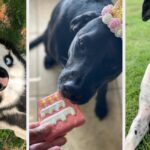 Just 28 Cute And Fun Products From Amazon That'll Help Brighten Your Dog's Day