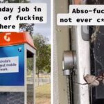 This Aussie Has Gone Viral For Uncovering The Most Nightmarish Nest Of Spiders I've Ever Seen