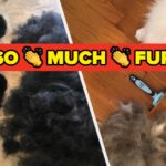 24 Cleaning Products And Devices You Need If Your Whole Life Is Covered In Fur