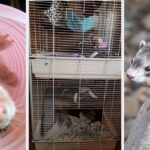 Just 17 Products From Amazon You'll Probably Want If You Have A Ferret