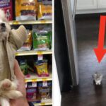 17 Dogs, Cats, And Other Animals That Are Not Only Cute, They're Heckin' Small