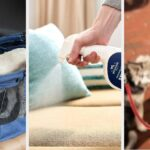 20 Things You Can Get On Sale At PetSmart Right Now
