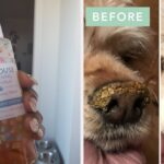 24 Products For Your Pet Reviewers Say They're Purchasing Again