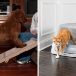 23 Practical Products From PetSmart Reviewers Are Glad They Bought