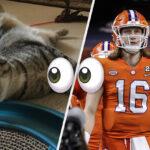 I Let My Cat Make All The Picks For My 2021 NFL Mock Draft