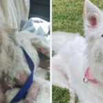 19 Dogs Who Are Doing Absolutely Amazing After Being Adopted