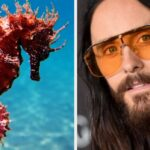 Daily Trivia Quiz: Seahorses, Jared Leto, And Italian Desserts