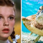 "Daily Trivia Quiz: ""The Wizard Of Oz,"" Potassium, And The Great Barrier Reef"