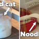 """19 Liquid Cats Who Said, """"I Don't Abide By Scientific Rules, I Create Them"""""""