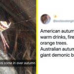 28 Tweets That Sum Up Why Autumn In Australia Is So Much Different To Fall In The US