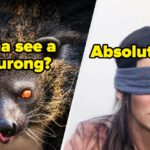 15 Nocturnal Animals That Make Me Even More Scared To Go Out At Night