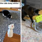 17 Puzzles On Amazon That Reviewers Say Actually Challenge Their Cats