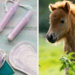 Daily Trivia Quiz: PMS, Baha Men, And Baby Horses