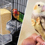 15 Things From Amazon That'll Help You Safely Spend More Time Outdoors With Your Pet Bird