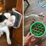 37 Pet Products That Reviewers Said Actually Did What They Advertised