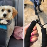 28 Pet Products You May Want To Bring On Your Next Trip To The Park